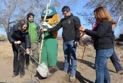 Plantación arboles nativos en quebrada de La Plata 1
