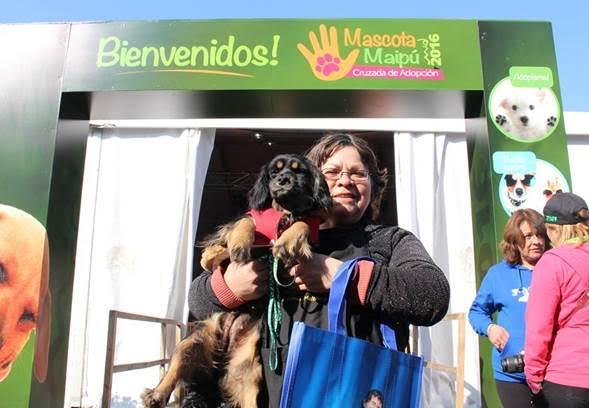 adopcion de mascotas en maipu