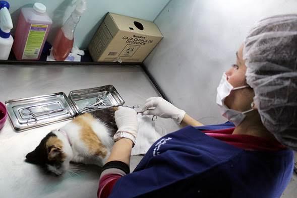 clinica veterinaria móvil dos
